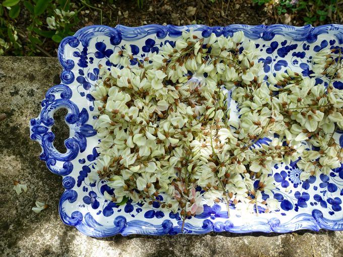 Acacia Blossoms