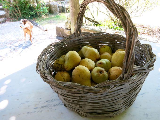 Pears, Elizabeth Minchilli