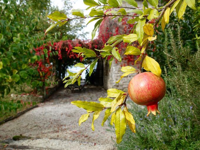 Pomegranate Elizabeth Minchilli