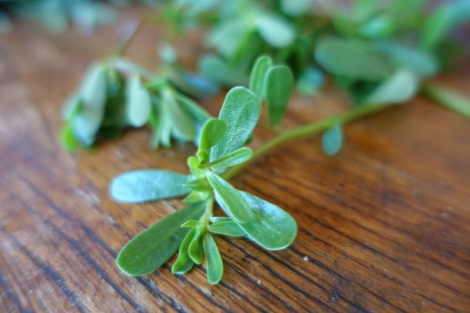 Zucchini and Arugula Salad - 2